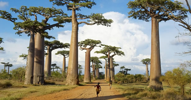 Circuit Madagascar 'Mora Mora' & Mauritius